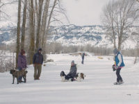 Video: Recreating with Dogs on Bridger Teton National Forest Trails
